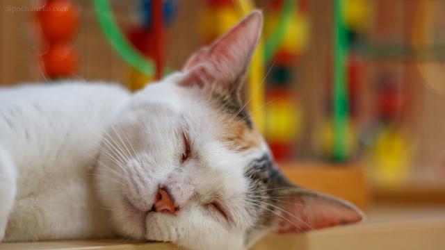 おやすみ猫