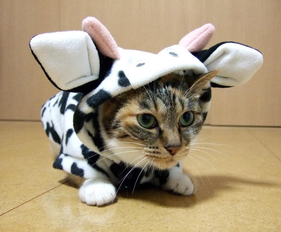 牛のきぐるみを纏う猫