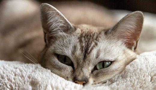 我が家の猫は「フォーキャットおから せっけんの香り」一択!